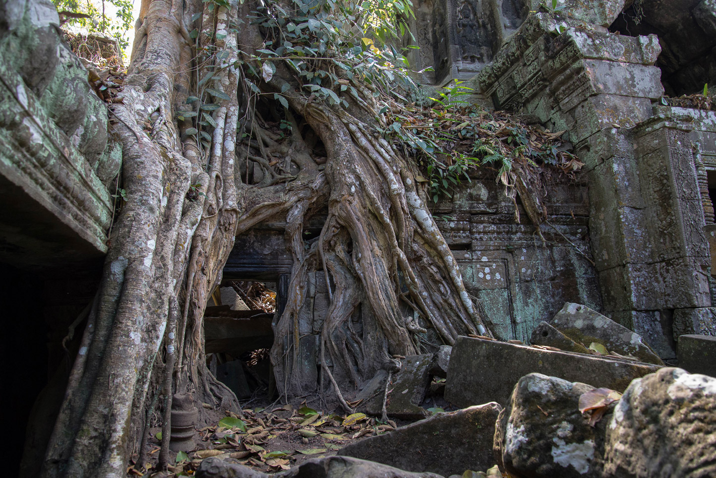 Old roots - Angkor Wat